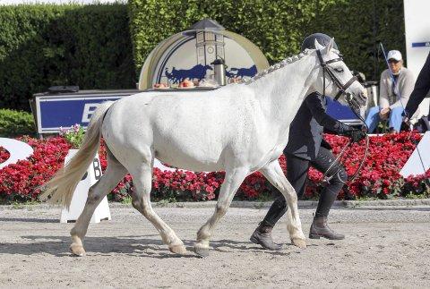 KLAR: Hedda Kosmo Gylseth og hesten Rocka i aksjon i dressur, som er en del av Nordisk mesterskap i sportskjøring med hest, der 13-åringen debuterer kommende helg. Foto: Lise Iren Kosmo Gylseth