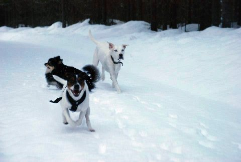 VIS HENSYN: Ringsaker kommune ber hundeeiere om å holde kontroll på hunden.