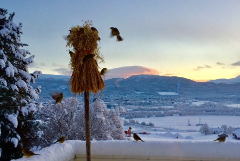 IKKE MER SNØ: Meteorologisk institutt har en klar melding å komme med. Er det ikke snø hos deg nå, får du ingen hvit jul – med mindre du flytter på deg. Illustrasjonsfoto: Marit Arnesen