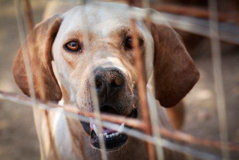 KARANTENE: Mattilsynets karantenestasjon ligger på Gardermoen og betjener hele landet. For tiden sitter tre hunder i karantene.