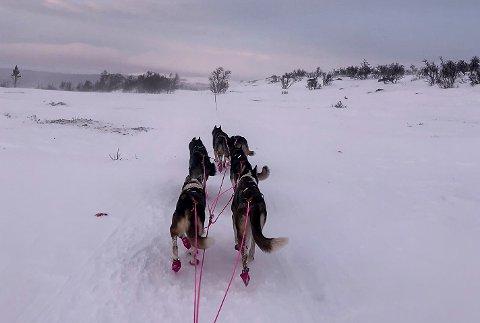 FREDELIG: Ute på sporet gikk det fredelig for seg, og Ingrid Andreassen kunne nyte viddene på vei mot sjekkpunkt Tufsingdalen.
