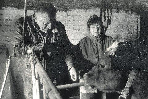 På båsen: Ivar og Jorunn Hopmark forsøkte å berolige sju store okser i fjøset  mens flammene raste fram mot gården Framstad.  De to var en stund redd for at de skulle miste både huset og fjøset. Heldigvis gikk det godt.
