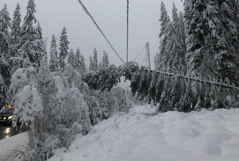 ÅRSAK: Tung snø som igjen har forårsaket at trær har veltet på strømnettet er hovedårsaken til den siste tidens strømbrudd.