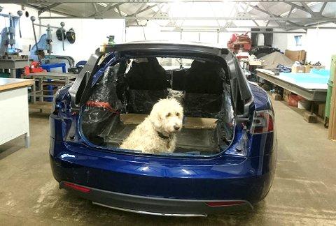 VOFF: En hund etter Tesla! Når eieren bare er rik nok, blir det også bra plass til hunden bakerst.
