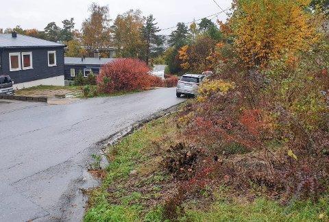 Sikten tilbake: I krysset Sofus Sørensensvei og Hjalmar Johnsensvei har beboeren klippet ned buskene som tok sikten.