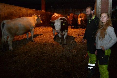 TAPER: Besetningen på Kjølen gård er taksert til seks millioner kroner, og John Kjølen er opptatt av å berge verdiene for datteren. Lagmannsretten viser til at han kan få erstatning fra Staten dersom en full gjennomgang i retten viser at nedslaktingen var unødvendig.