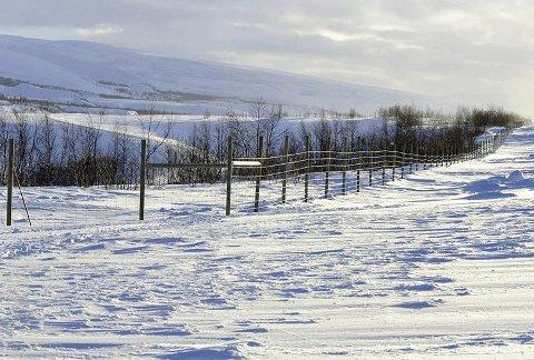 Tiltak: Bane NOR forlenger reingjerdet i Saltdalen. Foto: Øystein Grue)