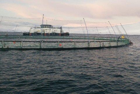 BEST i verden: Oppdrettsgiganten SalMar mener at Finnmark er en av verdens beste regioner for havbruk. Her fra selskapets oppdrettsanlegg i Syltefjord.Foto: SalMar