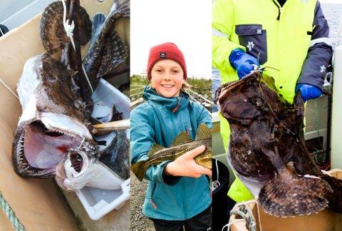 HAVETS KONGER I KAMP: Frimann Breivik (14) fra Eltoft var med å dra line utenfor Ramberg i slutten av november, da den glupske breiflabben på drøyt 20 kilo prøvde å knabbe ei trekilos kveite.