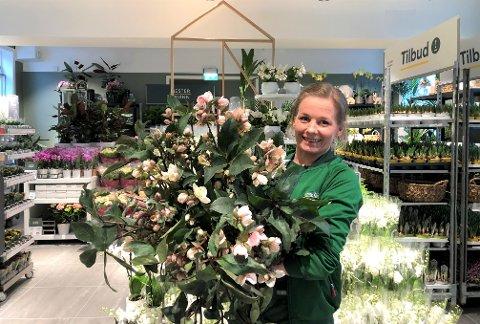 FORNØYD OG SPENT: Lena Messel fra Bergkrystallen er butikksjef for Mester Grønn på Holtet og håper nærmiljøet vil sette pris på det nye tilbudet. Her med favorittplanten sin Helleborus.