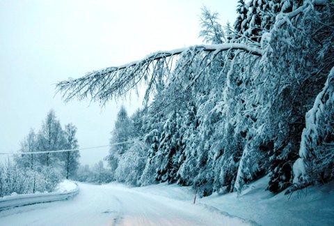 Slik som dette henger nå mange snøtunge trær i helspenn over Fylkesveg 245 langs Vestsida av Randsfjorden.