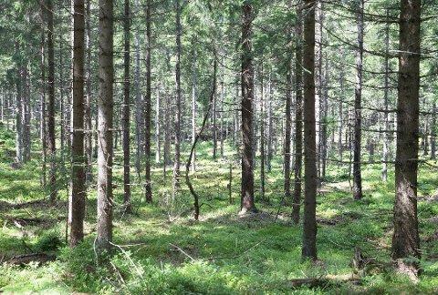 Naturreservat, illustrasjonsbilde.