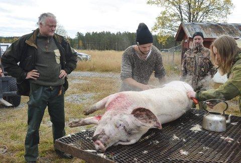 Lærer å slakte: Frode Andersson (fra venstre) og Espen Brekke følger med på lærlingene Mathias Venstad Nilsen og Beate Vamsti Gustavsen som gjør klar grisen.Alle foto: Mari Nyberget