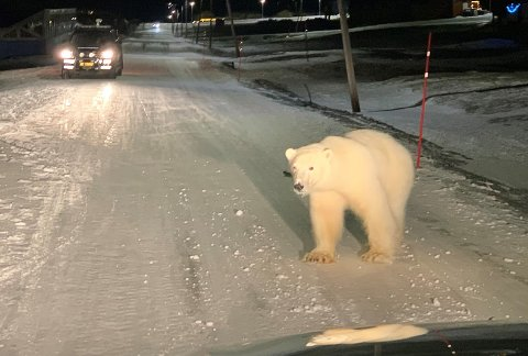 Ranværingen Atle Rokkan (51) er sysselmannsførstebetjent på Svalbard. Om morgen 2. juledag deltok han i å jage en isbjørn ut av hjertet av Longyearbyen, som ville inn på kroa i gågata.