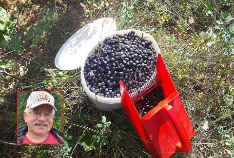 Masse blåbær lokker på Rødenesfjellet, forteller Harald Johnsen.