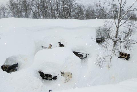 VINTER: Disse bildene av hundehusene er tatt vinteren 2020 og påsken 2021. Øyvind Skogen mener saken om hundehusene hans er meget spesiell.