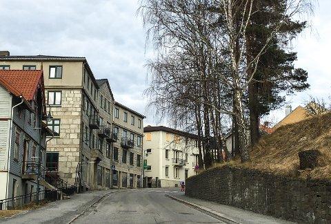 BJØRKENE SKAL VEKK: Om kort tid forsvinner bjørkene langs Storgata tvers overfor Aasnesgården.