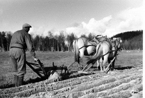 Før traktoren: I jordbruket var hesten den eneste trekkraften før traktoren kom og overtok det tunge arbeidet, her vist med pløying med to hester i Nord-Atndalen
