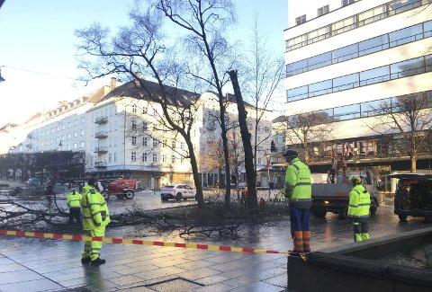Gren for gren . Folkene fra Bymiljøetaten var i full sving med å fjerne den syke bjørken foran Hotel Norge, da vi stakk innom. Snart vil det bli plantet et nytt bjørketre her i rundkjøringen.  Foto: BENTE-LINE SVELLINGEN