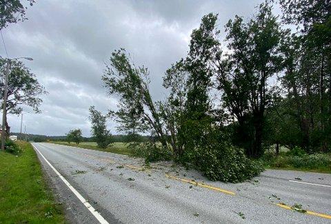 Tusenvis i Østfold mistet strømmen i juli da en kraftig vind herjet i det gamle fylket. I Skjeberg fikk dette treet hard medfart.