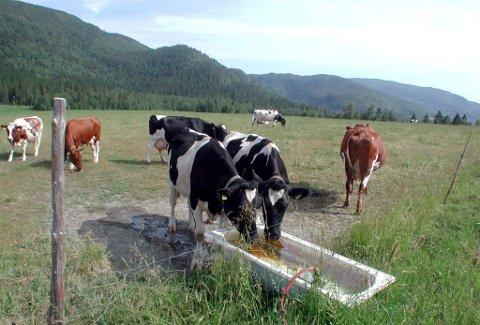 LAVERE: Årets krav fra bøndene i landbruksoppgjøret, ligger 150 millioner lavere enn fjorårets krav.