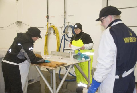 KONTROLL: I vinter tok Fiskeridirektoratet en rekke prøver for å finne rett omregningsfaktor. Foto: Kai Nikolaisen