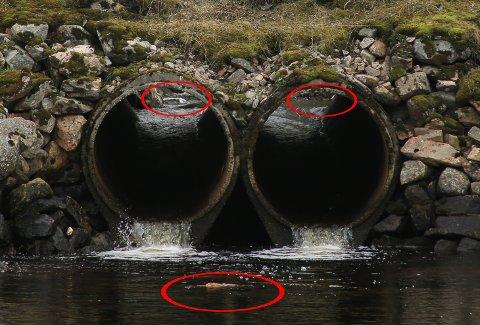 I ELVA: June Grønseth har markert søppelet som ligger i elva. Her renner elva ut i havet under E10.