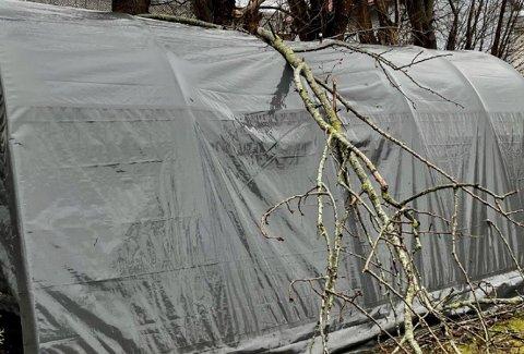 Store grener falt ned og ødela garasjeteltet i jula, skriver nøttlendingen i et brev til kommunen.