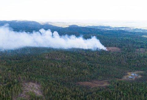 SKOGBRANN: Her synes røyken fra skogbrannen i Østmarka. FOTO: GUNNLEIK SEIERSTAD