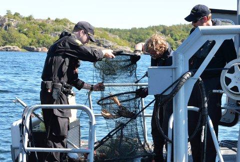 STRENGE REGLER: Hummerbestanden langs norskekysten er sterkt redusert. Bildet er fra en aksjon mot ulovlig hummerfiske i Oslofjorden i 2015.