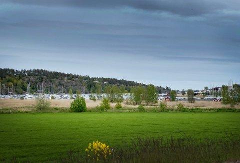 BØR VERNES: Nøtterøy, på grunn av det gunstige klimaet her ved Oslofjorden, har et enestående rikt og variert dyre- og planteliv, noe som krever at tilstrekkelig antall av forskjellige naturområder tas vare på, skriver artikkelforfatteren.