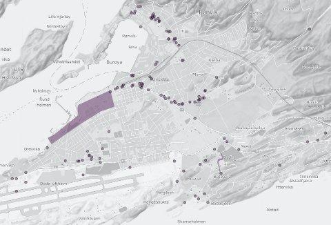 Det er mange registrerte funn i Bodø når det gjelder  tromsøpalme.