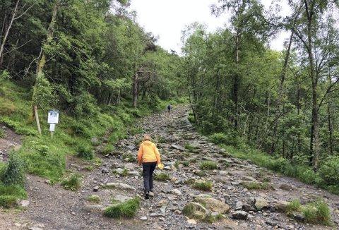 Omtrent midt i den første oppstigningen, hvor du kan skimte en person, vil nå Skogselskapet ruste opp den gamle traseen som går inn i skogen til venstre. (Foto:  GEO WILSON)