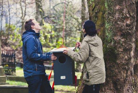 Rundt 50 kasser håper elevene å få opp i bynære trær rundt Bergen.