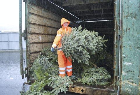 Monika Eide gir et utrangert edelgran-juletre litt ekstra fart for å få det lenger inn i containeren. (Foto: TOM R. HJERTHOLM)