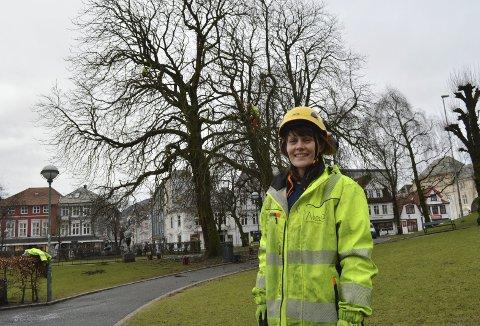 Kathrine Tysnes Haldorsen leder an i jobben med å fjerne døde og tørre grener fra de to store hestekastanjetrærne i Teaterparken. (Foto: TOM R. HJERTHOLM)
