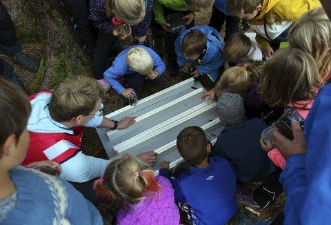 Nå lurer du kanskje på hva som får barna til de grader interessert. Jo dette er noe så sjeldent som et insektkappløp. Foto: ANDRE MARTON PEDERSEN
