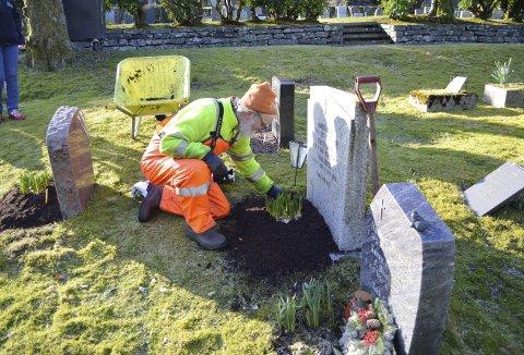 NESTOREN:  Inge Eidsheim sørger for at alle gravstedene får det pent til påske, og denne jobben har han utført med glans i et langt yrkesliv.  «Sommerhjelpen fra 1980» er fortsatt still going med sine grønne fingre. FOTO: TOM R. HJERTHOLM
