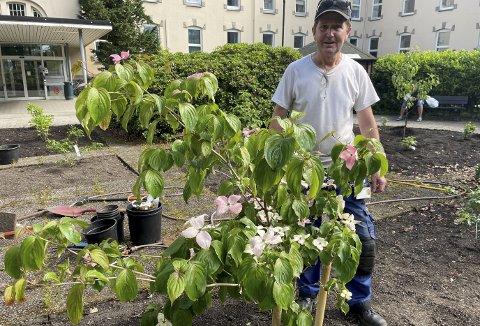 Olafur Olafsson ønsket å planter noe spiselig i den gamle rosehagen. Som tenkt, så gjort – og her står han bak en korea kornell som foruten å få nydelige blomster også får røde bær som kanskje ikke smaker så godt, men er fullt spiselige. Foto: TOM R. HJERTHOLM