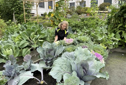 Driftsleder Hilde Moen Selstø midt i det vi gjerne kan kalle «matfatet – omgitt av bla. grønnkål, hvitkål, rosenkål, blomkål, kålrot, pyntekål og spisskål. Bare for å nevne noe av alt det som dyrkes av nyttevekster. Foto: TOM R. HJERTHOLM