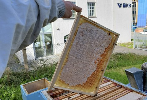 Det ble mye honning på Solheim-prosjektet, og om det går som Manuel Hempel håper, vil biene også neste år være med og produsere «Solheim-honning». Foto: MANUEL HEMPEL