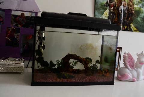 UJEVN DYBDE: Akvariet gir fiskene ulik dybde å boltre seg på.