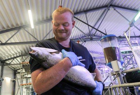 OPPDRETT: Driftsleiar Fredrik Grahl-Jacobsen med ein laks i  september, då vekta låg på rundt fire kilo. Skånsom handtering frå anlegget til brønnbåt var prosjektet som lukkast torsdag.