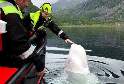 - ARTIG: - Det er artig å holde på med. Han er en stor hval, sier Mathias Guttorm Frostmo om å følge med på Hvaldimir.