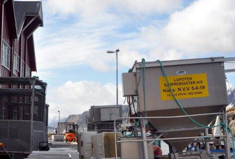 MÅ UNDERSØKE: Lofoten Sjøprodukter AS får kritikk for ikke å ha gjennomført miljøundersøkelser i Buksnesfjorden.