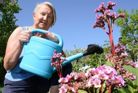 MÅ VANNE: – Nå lønner det seg å vanne på kveldstid for å berge blomster og planter, sier Karin Bredesen i Åsnes Hagelag.