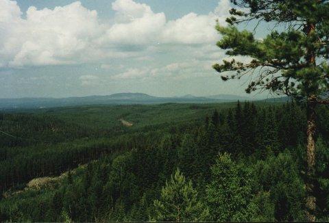 MYE SKOG: Dette er en del av den skogen Øystein Østgaard nå har kjøpt på Åsnes Finnskog.