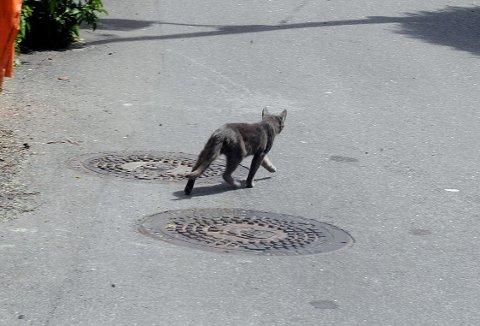 I VEIEN: Ikke alle stopper når de kjører over en katt i veien. Illustrasjonsfoto: Kurt André Høyessen