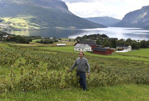 Stort areal: Jordene på Søre Bøe er plantet til med solbærstiklinger som har vokst seg store, og arealet på begge sider av lokalvegen utgjør til sammen 70 mål. – Under gode forhold kan det høstes tonnevis med solbær herfra, forteller Eirik Erikson Berge. Det er praktutsikt fra jordene på Søre Bøe.