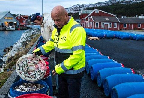 FABRIKKSJEF: Per Røys ved Pelagia i Kalvåg meiner det er mogleg å doble verdiskapinga for brisling. Fredag tok han i mot ein historisk fangst.